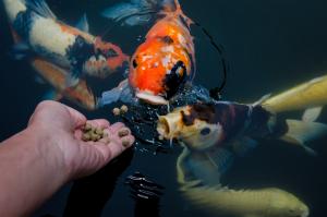 طعام جاف للأسماك